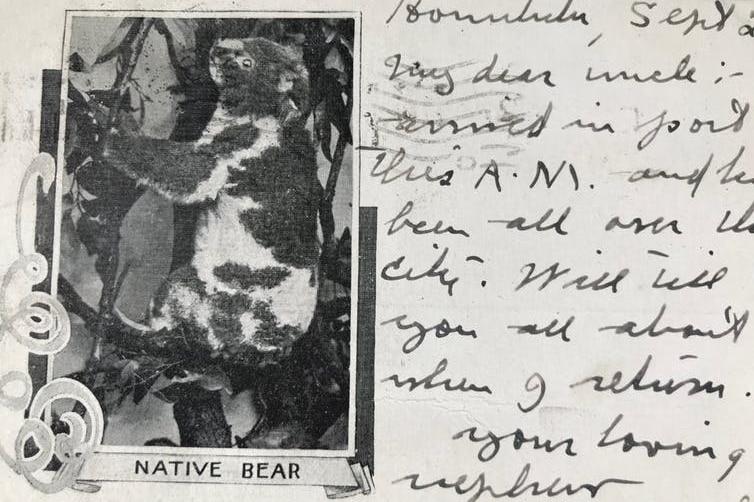 "A 1903 postcard featuring a ""native bear""."