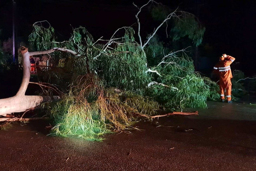 Tree fallen over a road in Katherine.