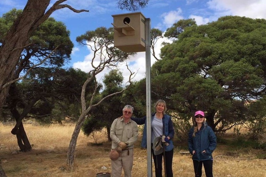 Two women and a man stand next to a metal pole which has a light brown wooden nest box at the top of it.