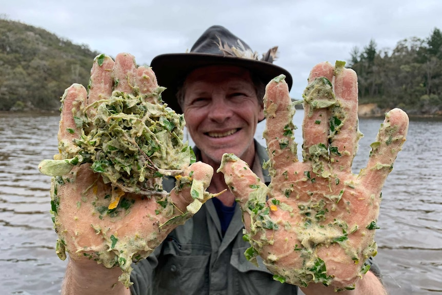 Noongar man Larry Blight holds up his hands which are covered with the frothy green lather of the Djop Boorn plant.