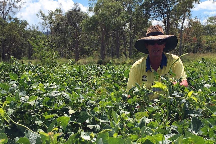 Mackay region cane grower, Simon Mattsson