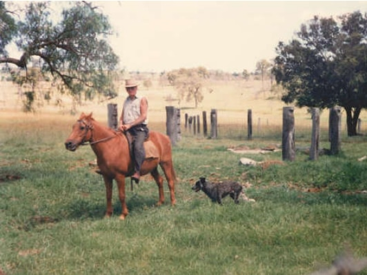 Old photo of man on horse with his cattle dog running beside