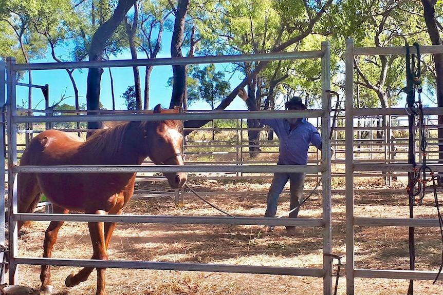 A man tries to tame a horse.