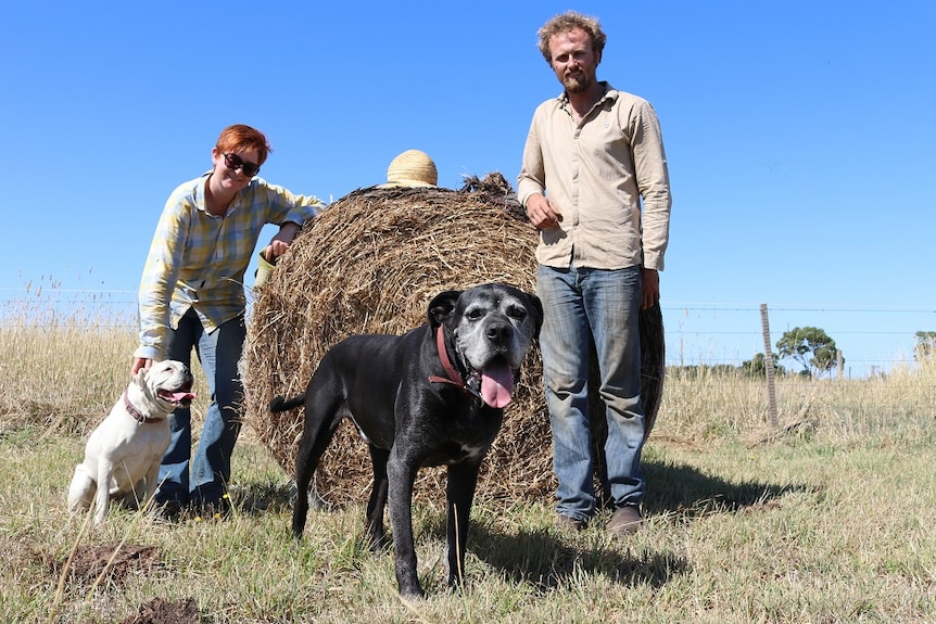 Two people standing with hay bail with two dogs