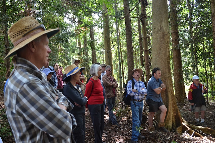 A group of people standing in a forest listening to a talk.