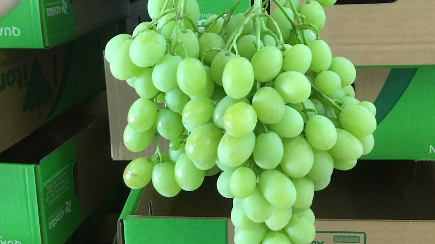 Grape company fined by ACCC for misleading consumers