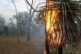 A tree burns in Arnhem Land