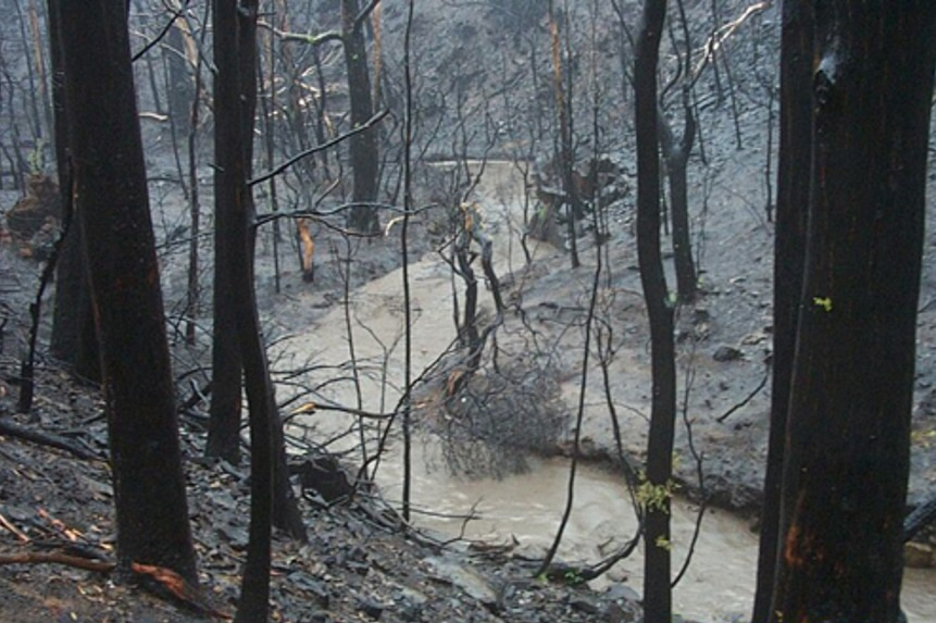 Condor Creek in the Cotter catchment after 2003 bushfires