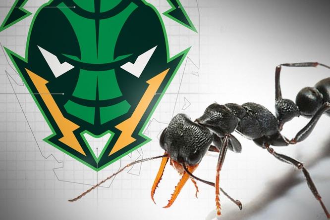 Composite image of NBL team logo and jack jumper ant.
