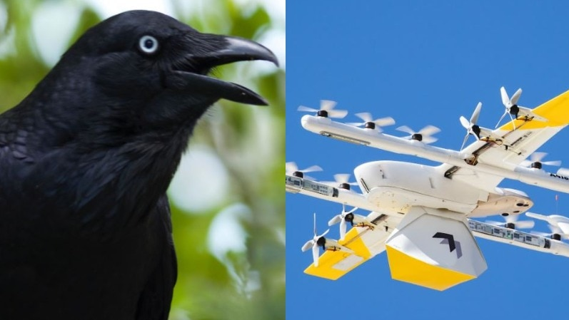 A composite image of a raven and a drone