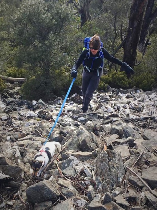 Biscuit the dog on a lead held by owner Cathy Byrne.