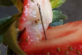 This needle was pulled out a strawberry found in Queensland's Gladstone.