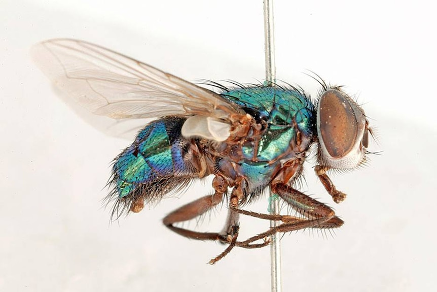 a close up of a fly