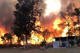 Massive flames burn behind a line of trees as smoke fills the sky.