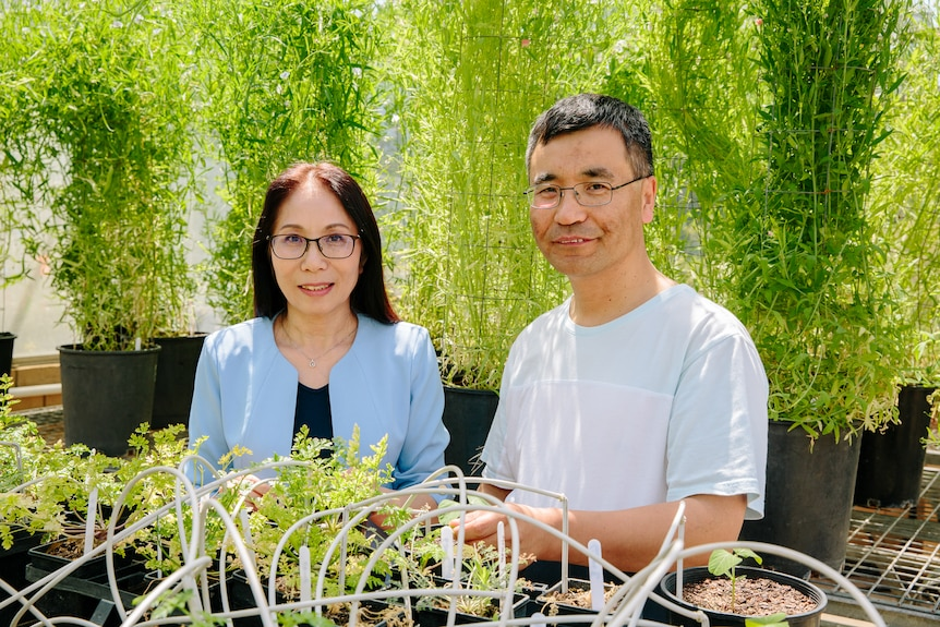 Male and female researcher look over plants in a laboratory