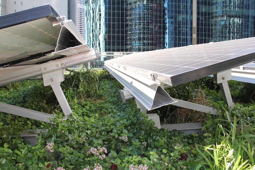 Solar panels with plants growing underneath.