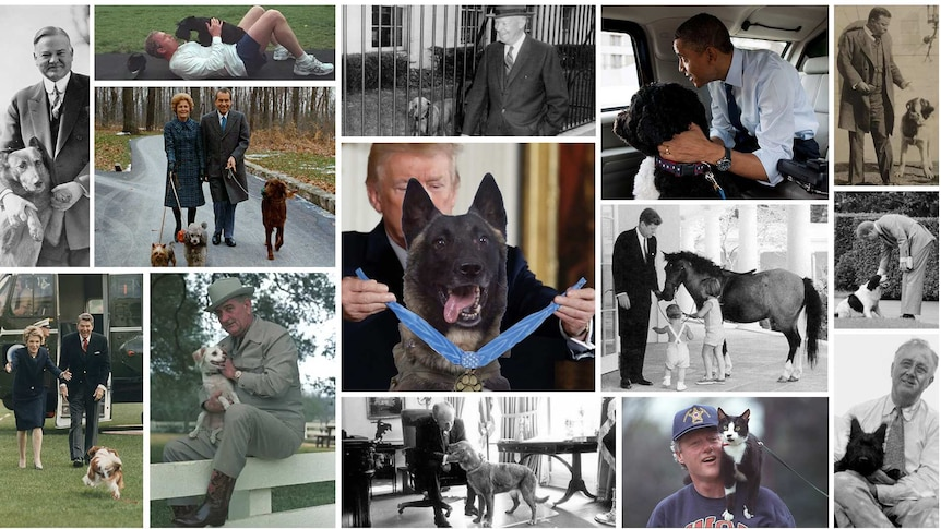 Montage of presidents with their pets