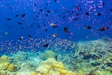 Fish and coral densely populate the deep blue waters around Christmas Island