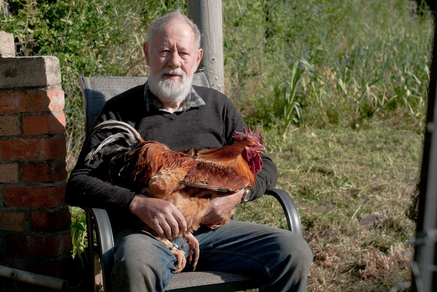Dr Gil Stokes sitting with his Quamby chook on his lap.