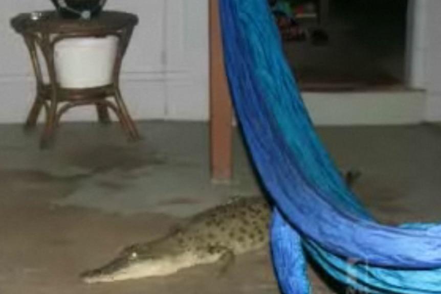 A small crocodile inside a family living room.