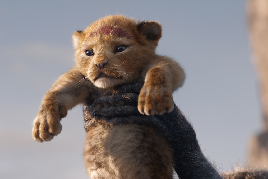 Colour close-up still of animated young lion cub Simba being held up in 2019 animated feature film The Lion King.