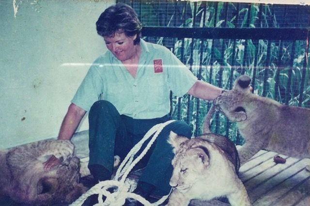 A woman playing with three lion cubs