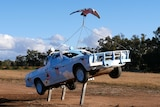 A ute painted light blue with pink and white galahs on it stands on three metal poles.