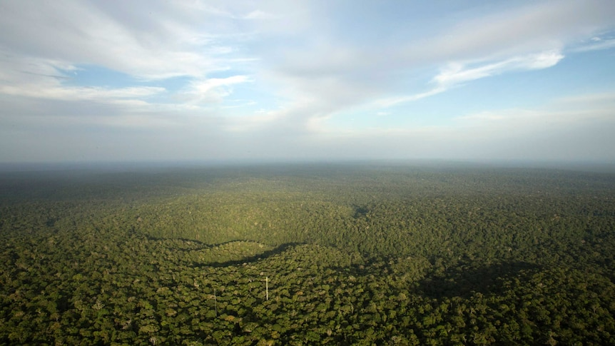 The Amazon rainforest has been shown to generate its own rainfall