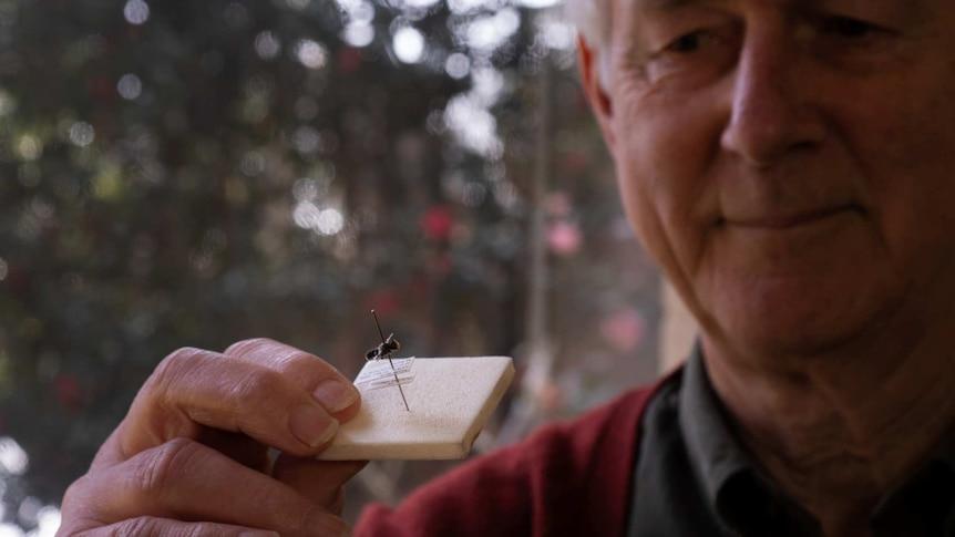 Michael Batley holding a bee