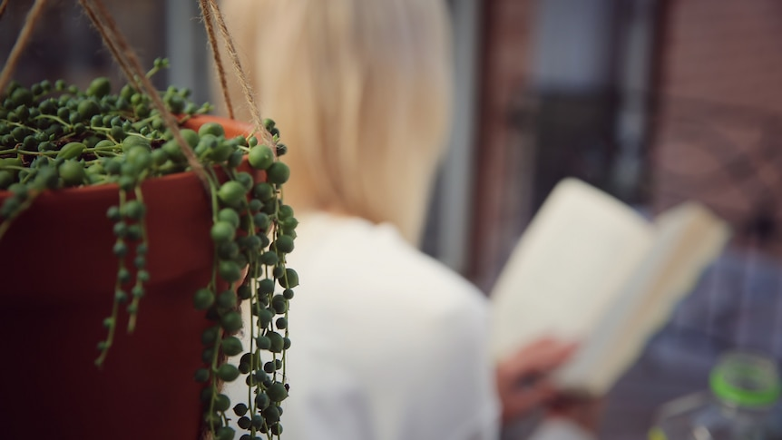 A blurred image from behind a woman reading a book with a hanging basket plant in focus in the foreground.