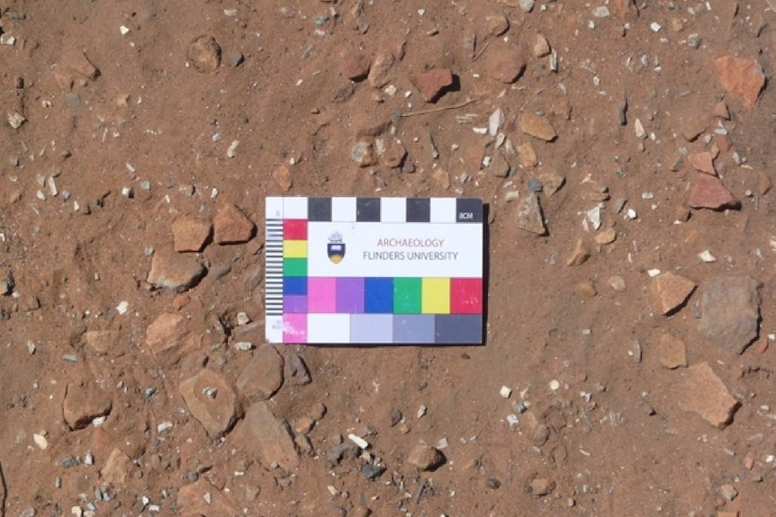 An image showing white bone fragments in the red clay and dirt at Sturt Creek.
