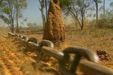 Illegal land clearing is on the rise in NSW