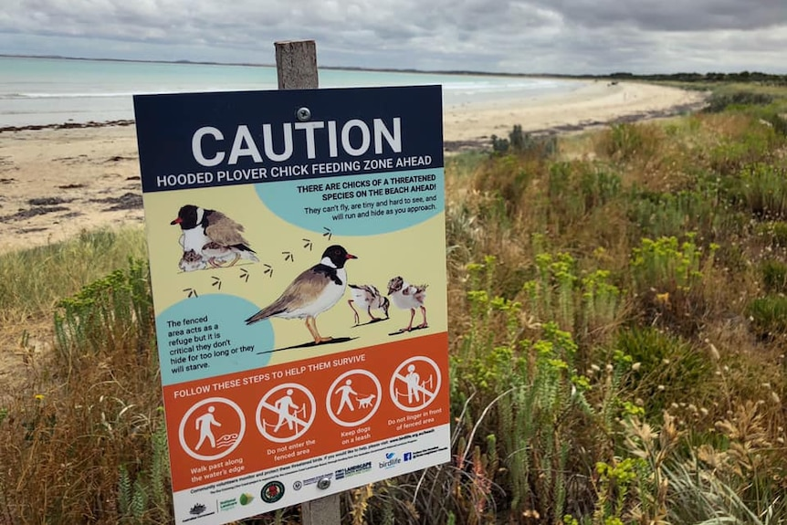 """A sign warns of a """"Hooded Plover chick feeding zone"""", with a sandy beach stretching into the distance in the background"""