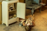 An old-fashioned kitchen, with open fridge and open oven, bright wallpaper, and body of woman in apron laying on the floor.