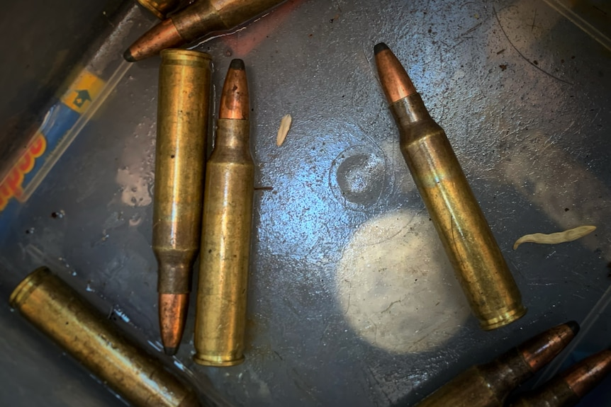 Bullets sit in a metal tin.
