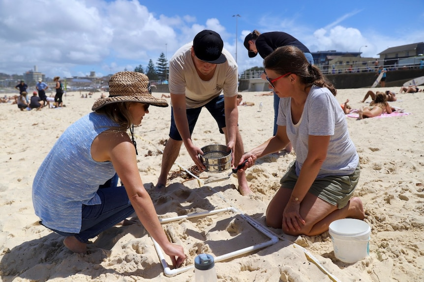 People on a beach hold a metal sieve over the sand.