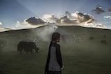 西藏游牧民族面临着传统生活方式的诸多挑战,气候变化可能是最大的挑战。