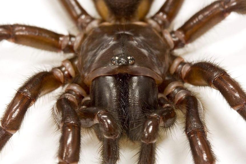 A spider up close.