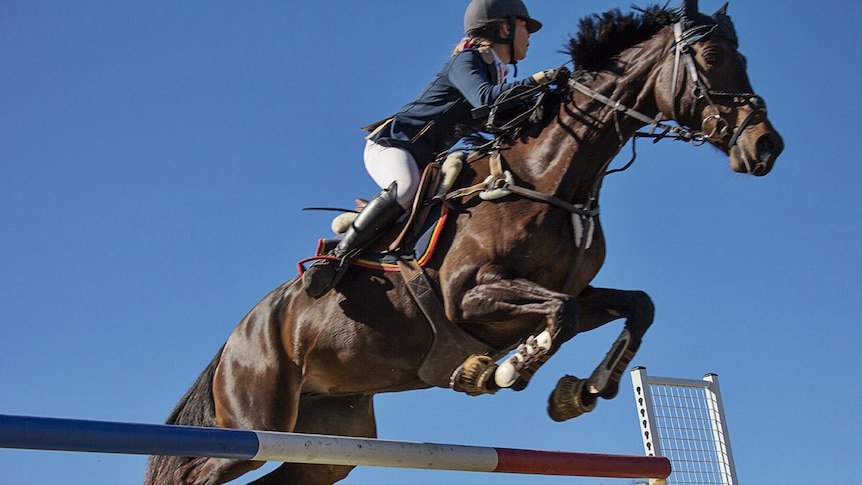 A horse leaps over a jump