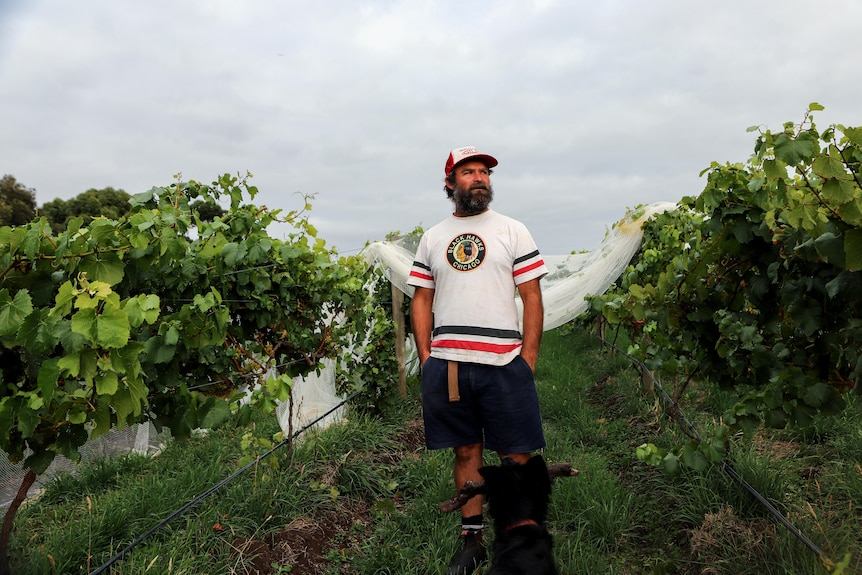 Man wearing shorts t-shirt and hat stands in vineyard with grey skies behind him
