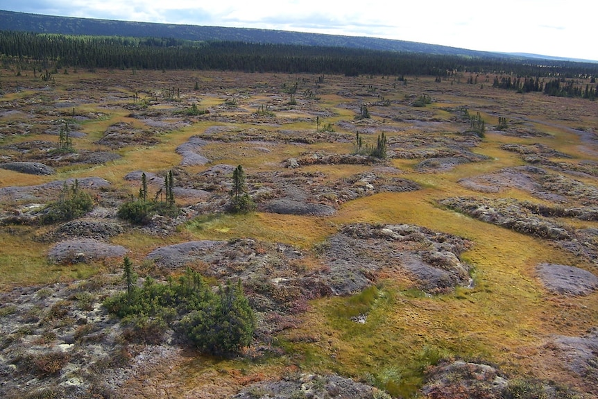 Permafrost terraces interspersed with dwarf shrubs and sedge meadows in a wildlife reserve in Alaska.