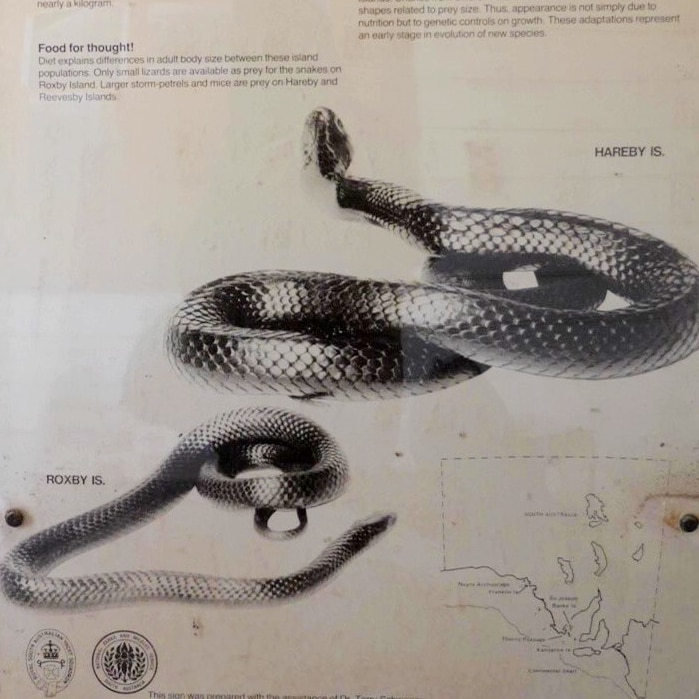 Sign depicting a two black tiger snakes with description above