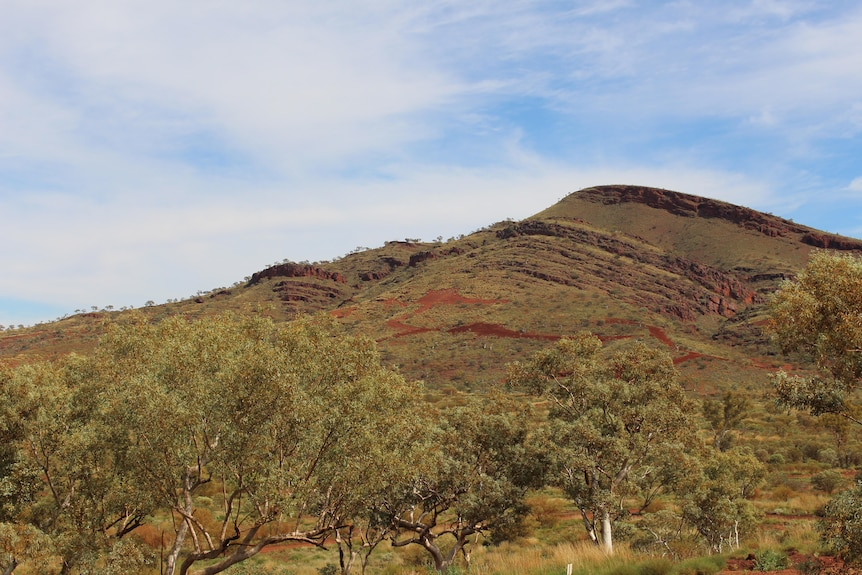 Tree in the foreground and a hill covered in trees and grass on PKKP country in WA.