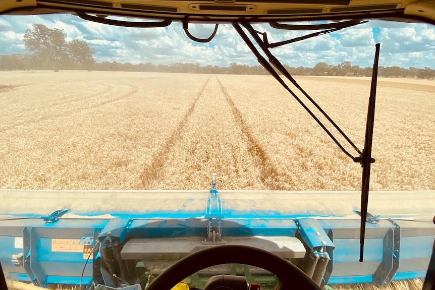 Machine harvesting crop