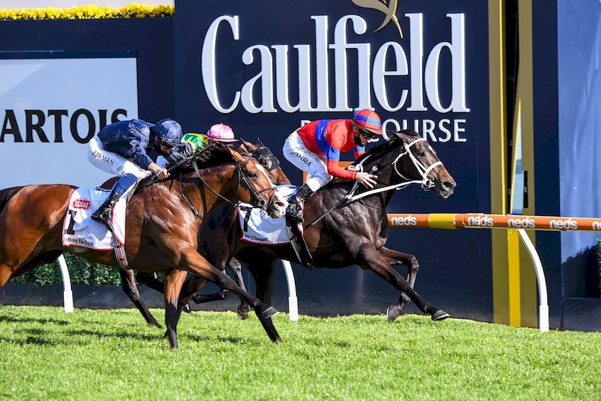 A racehorse comes past the winning post in a big race, with two other horses close behind.