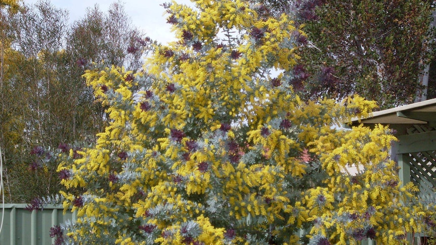 Yellow flowers on a tree