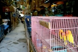 Colourful birds in cages