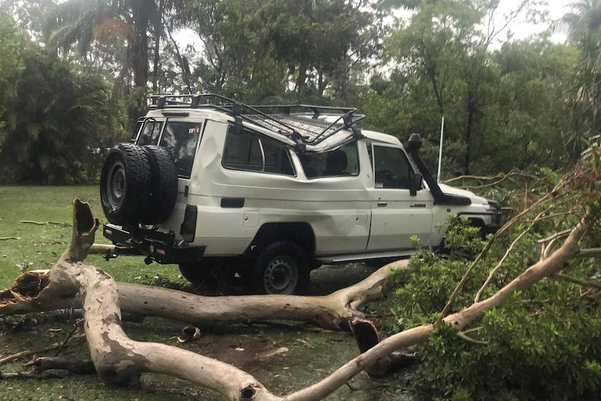 A car was severely damaged by a falling tree at Little Mountain.
