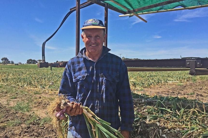 Garlic farmer Peter Hackett holds freshly harvested garlic.