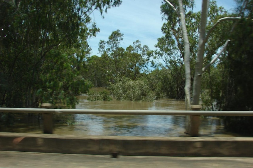 A brown river in flood with gum trees submerged in water, with a bridge railing in the foreground.
